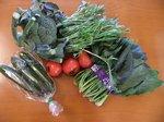 青々とした葉菜類