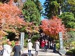 鎌倉五山第二位の円覚寺総門の紅葉