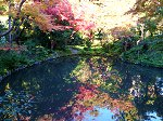柳原神池の水面に写る紅葉