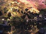 放生池に写る紅葉