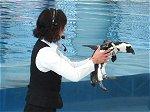 ペンギンのご挨拶