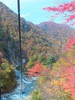 山々を縫うようにしてゆっくり進む、美しい紅葉の中を片道約25分間の空中散歩