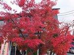 レストランカフェ周辺の紅葉