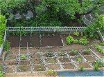 裏庭の夏野菜