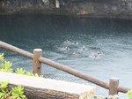 2014宮古諸島20.jpg