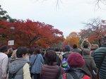 2014皇居紅葉狩り4.jpg