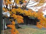 2014皇居紅葉狩り6.jpg