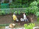 2015ジャガイモ収穫2.jpg