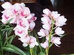 2015春の花2.jpg