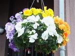 2015春の花3.jpg