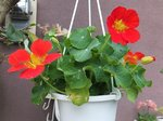 2015春の花4.jpg