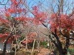 2015鎌倉源氏山散策12.jpg