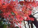 2015鎌倉源氏山散策5.jpg