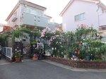 2016ご近所の花1.jpg