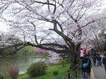 2016三ツ池公園1.jpg