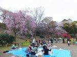 2016三ツ池公園11.jpg