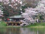 2016三ツ池公園15.jpg