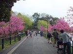 2016三ツ池公園4.jpg