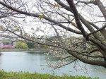 2016三ツ池公園6.jpg