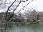2016三ツ池公園8.jpg