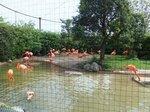 2016上野動物園21.jpg