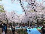 2016上野花見11.jpg