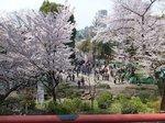 2016上野花見12.jpg