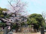 2016上野花見17.jpg
