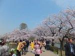 2016上野花見25.jpg