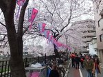 2016大岡川3.jpg