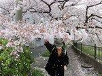 2016柏尾川桜24.jpg