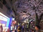 2016目黒川夜桜12.jpg