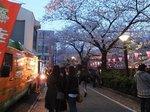2016目黒川夜桜5.jpg