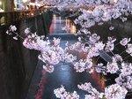 2016目黒川夜桜8.jpg