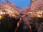 2016目黒川夜桜9.jpg