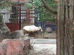 2016金沢動物園7.jpg
