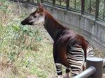 2016金沢動物園8.jpg