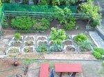 20165月の菜園1.jpg
