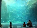2019新江の島水族館25.jpg