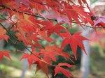 嵯峨野天龍寺の紅葉