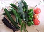 夏野菜苗の収穫
