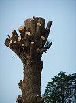 何ともへんてこな木のオブジェ