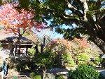 浄智寺境内の紅葉