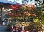鎌倉国宝館の紅葉