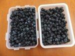 新鮮で甘くて大粒のブルーベリー
