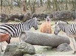 広い野原の中、群れをなす草原動物たち