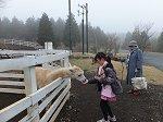 富士山こどもの国「まきば」でポニー、ウサギ、アルパカなど動物とのふれあい