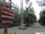 翰林公園のシンボル、椰子の並木道