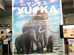 特別展 マンモス「YUKA(ユカ)」