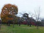 2014皇居紅葉狩り10.jpg